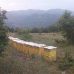 lokacii-api-21