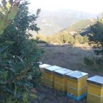 lokacii-api-24